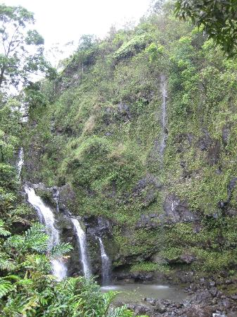 Road to Hana Tours 사진