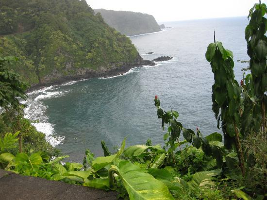 Road to Hana Tours: Can't see this from the tour van.....need to get out of the car folks...