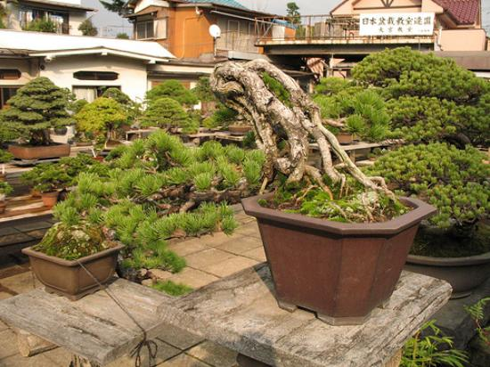 Saitama, Japon : Omiya Bonsai Village