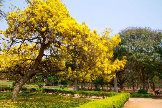 Parque Cubbon: Cubbon Park