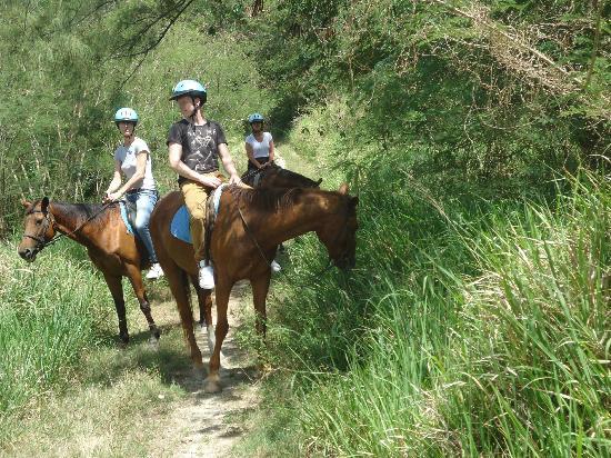 Caribbean International Riding Centre: Horses wanting to eat lol