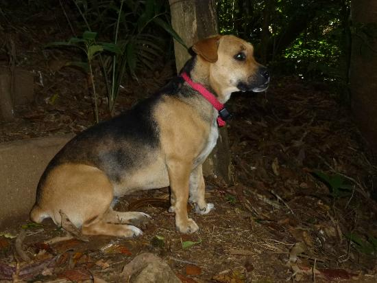 Hidden Canopy Treehouses Boutique Hotel: One of our lead dogs while hiking