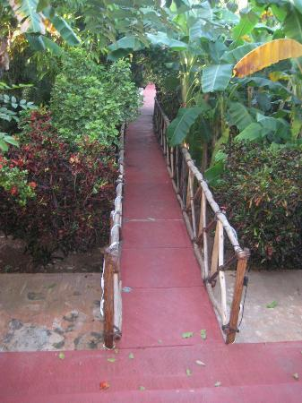 Casa Hamaca Guesthouse : path to/fro B&B