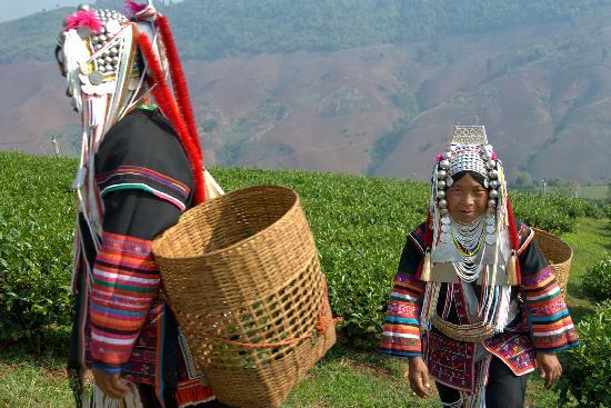 Sapa Vietnam Picture Of Vietnam Culture Travel Private Day Tours Sapa Tripadvisor