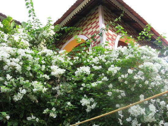 Mickey's Homestay: Yasminflowers around balcony