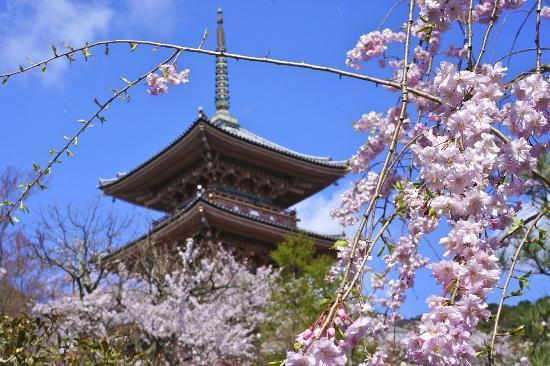 โรงแรมพาเลซไซด์: Kiyomizu Temple, Kyoto