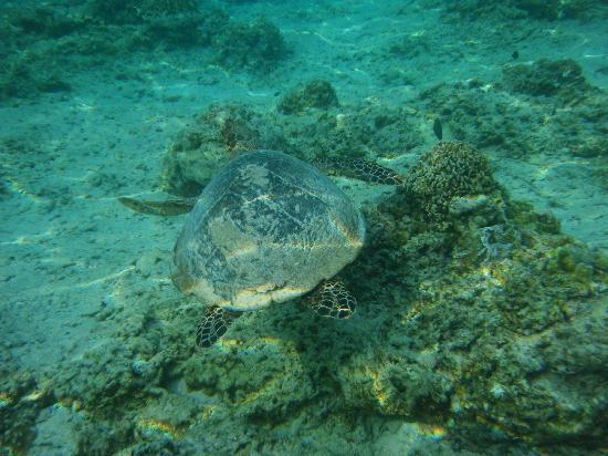 Villa Grasia Resort & Spa: turtles - magical companions