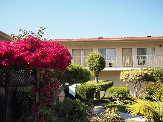 California Suites Hotel: 中庭を囲む客室 様々な花や植物が癒されます