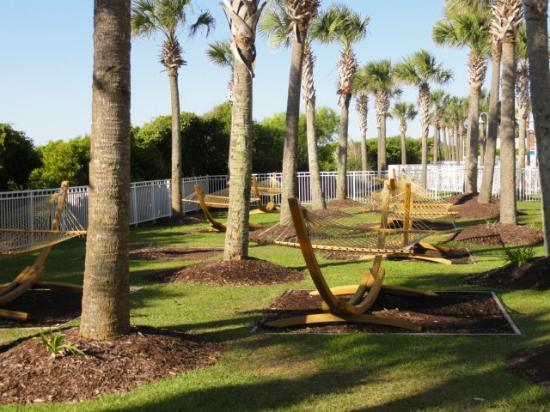 Myrtle Beach Marriott Resort & Spa at Grande Dunes: hammocks