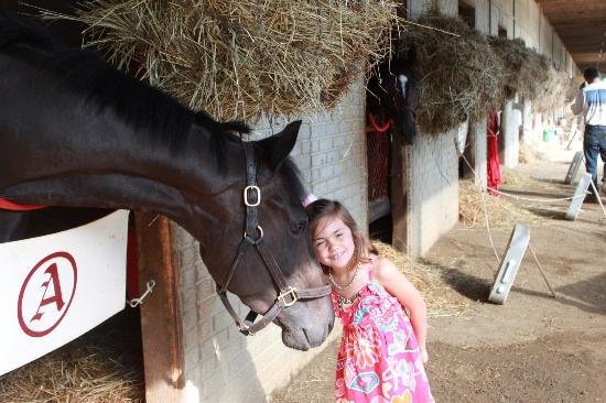 Colonial Downs: Petting Horses