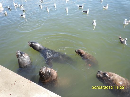 Playa Mansa: lobos marinhos e gaivotas