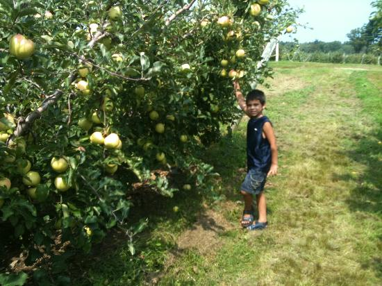 Tougas Family Farm: Apples