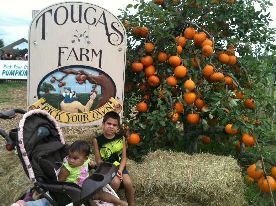 Tougas Family Farm : Tougas Farm