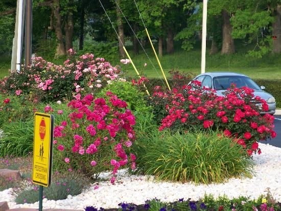 Best Western Cades Cove Inn: Flower's on grounds