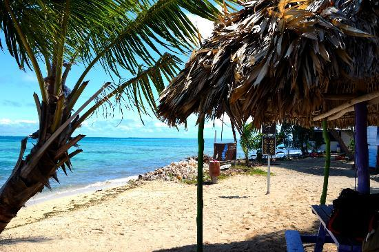 Tobacco Caye Lodge: Thatched Bar