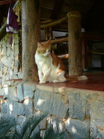 Chalet Tropical Village: Il gatto di casa