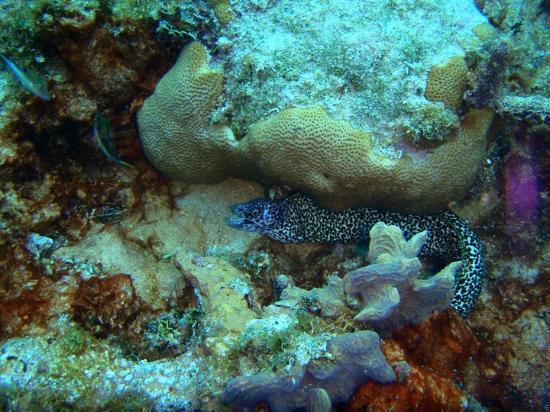 Blue Life Centro de Buceo: Coral en Sand Andres Isla