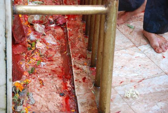 Dakshinkali Temple: Sangue a volontà