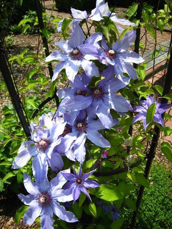 The Frelinghuysen Arboretum: Flowers in the Arboretum