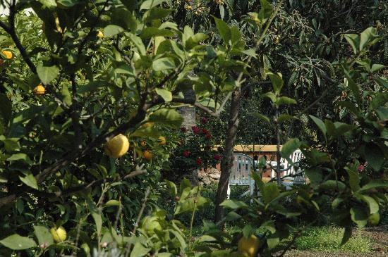 Villa Melodie: tha garden