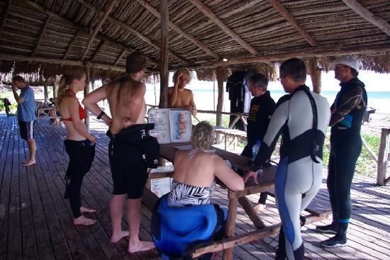 Barra Lodge: Dive Briefs