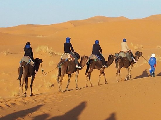 Sahara ATVs: the camel trip