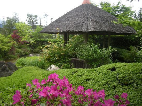 สวนไทโซอิน: 退蔵院庭園の写真その2