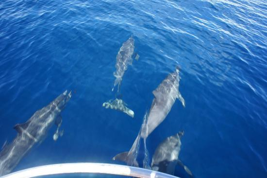 Emaho Sekawa Resort: Dolphins on the way to Sand Island