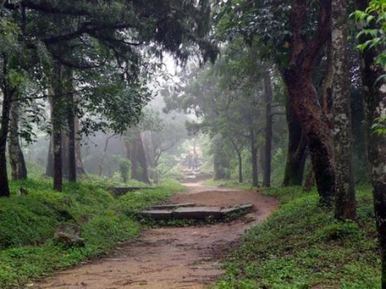 Nandi Hills: Walk through the woods