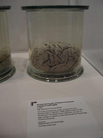 Wellcome Collection: Brain exhibition,ground floor