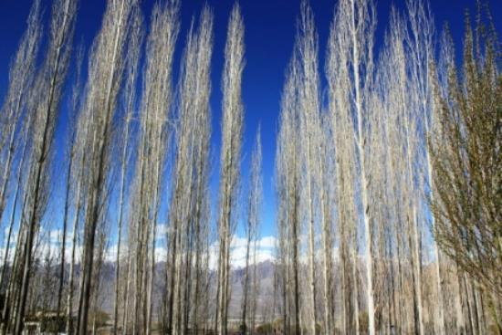 Ladakh Sarai: View from the open space