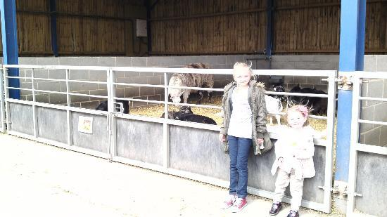 Cannon Hall Museum: watching the goats