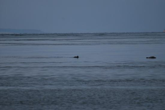 The Gun Lodge Hotel: Grands dauphins jeunes dans la baie