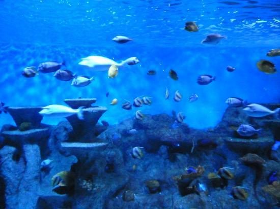 Roquetas de mar aquarium spain top tips before you go Aquarium en roquetas de mar