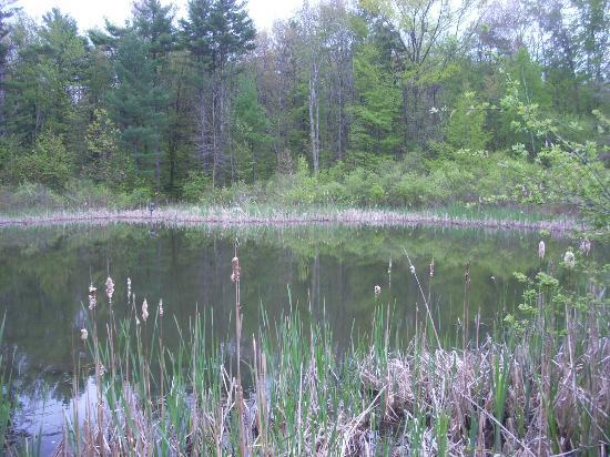 Tower Hill Botanic Garden: The wildlife refuge pond is near the woodland walk.