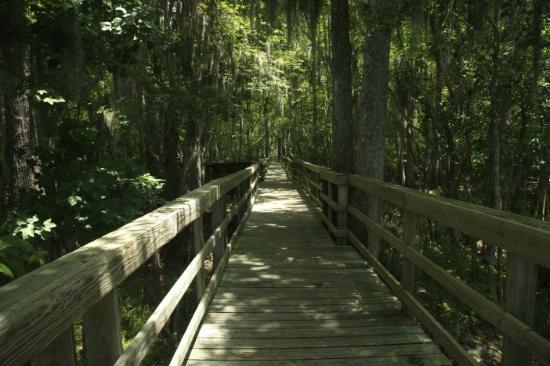 Chiefland, FL: Boardwalk to Suwanee River