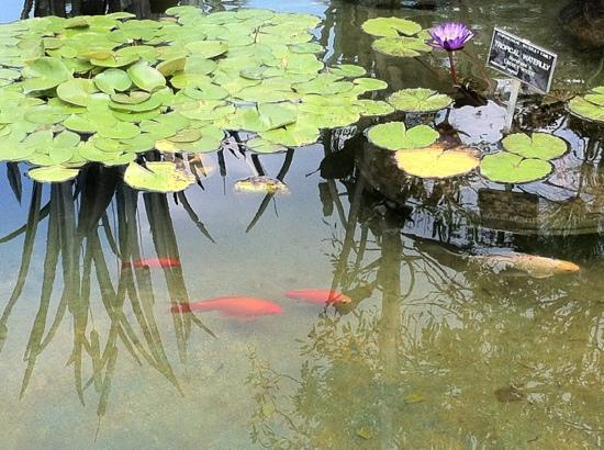 Mercer Arboretum Botanic Gardens Humble 2018 All You