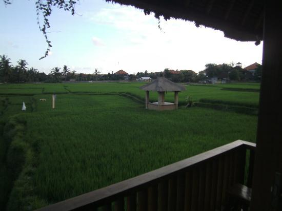Biyukukung Suites and Spa: View from our room Tekukur 1