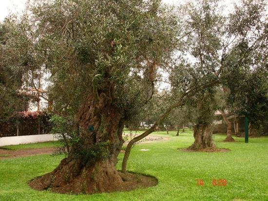 Bosque del Olivar. San Isidro.