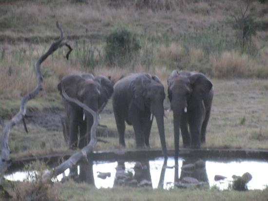 The Stanley and Livingstone: our late afternoon visitors