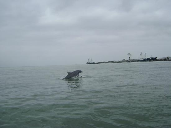 El Jardin de Playas: Avistamiento de delfines