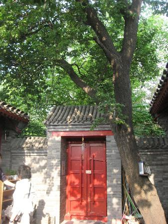 Beijing Apricot Courtyard Inn: tree in e courtyard