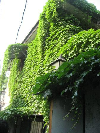 Beijing Apricot Courtyard Inn: neighbour house in e deep hutong