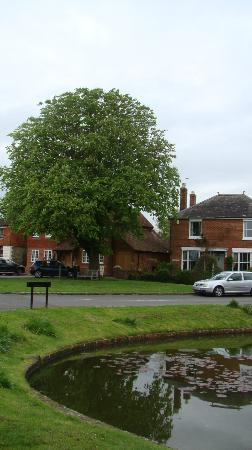 Old Pond Cottage: vue générale