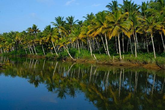 Estuary Island Resort  Kerala