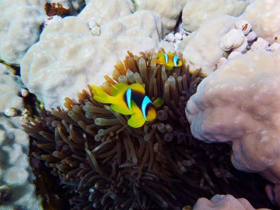 Mirage Divers Diving Center: Eine entzückende Familie
