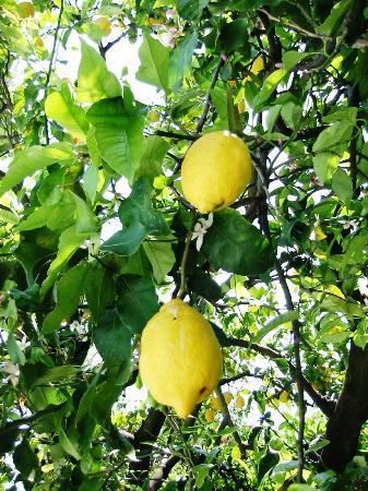 Esperidi Resort: Lemontree at pool