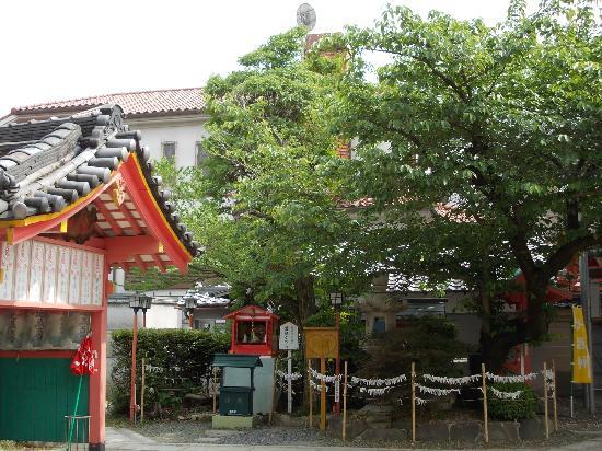 Aizindo Shomanin Shrine: 愛染かつら