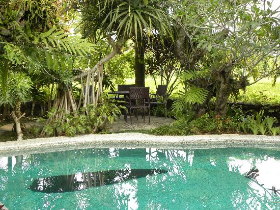 Saudara Home: piscine