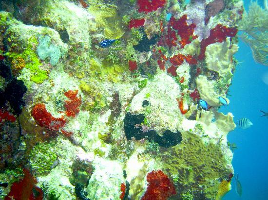 Mayan Divers: Coral tower